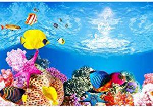 meilleur fond d'aquarium
